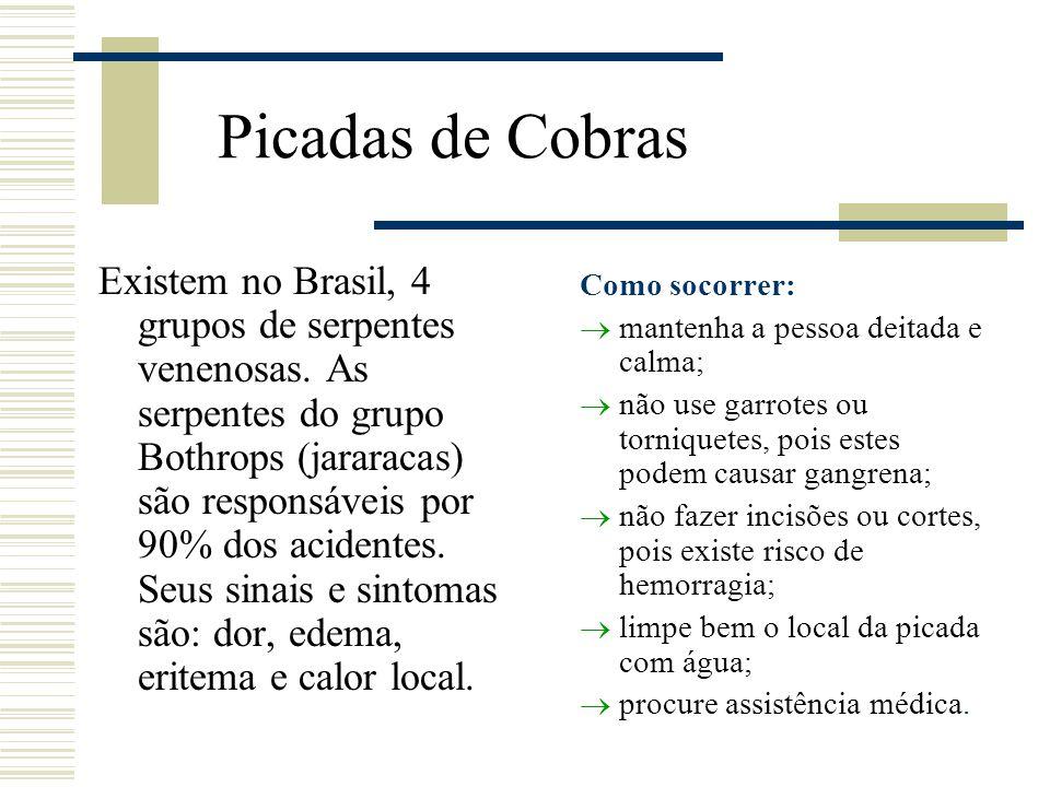 Picadas de Cobras Existem no Brasil, 4 grupos de serpentes venenosas. As serpentes do grupo Bothrops (jararacas) são responsáveis por 90% dos acidente