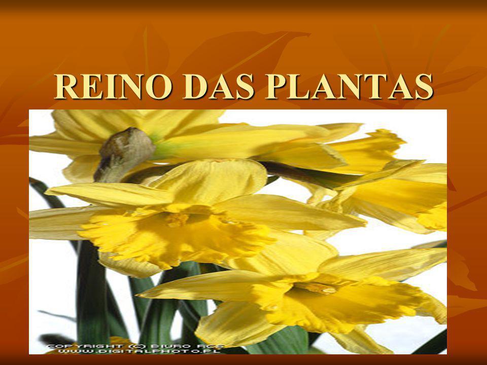 REINO DAS PLANTAS