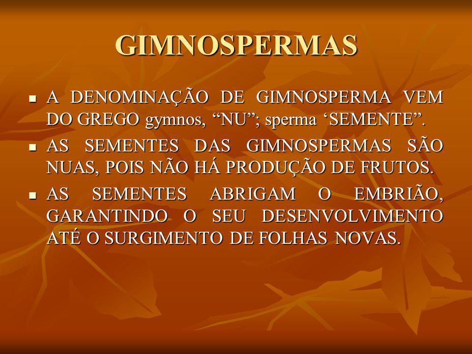 """GIMNOSPERMAS A DENOMINAÇÃO DE GIMNOSPERMA VEM DO GREGO gymnos, """"NU""""; sperma 'SEMENTE"""". A DENOMINAÇÃO DE GIMNOSPERMA VEM DO GREGO gymnos, """"NU""""; sperma"""