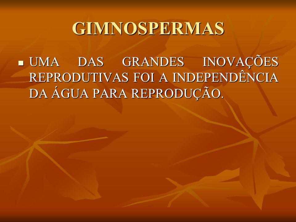 GIMNOSPERMAS UMA DAS GRANDES INOVAÇÕES REPRODUTIVAS FOI A INDEPENDÊNCIA DA ÁGUA PARA REPRODUÇÃO. UMA DAS GRANDES INOVAÇÕES REPRODUTIVAS FOI A INDEPEND