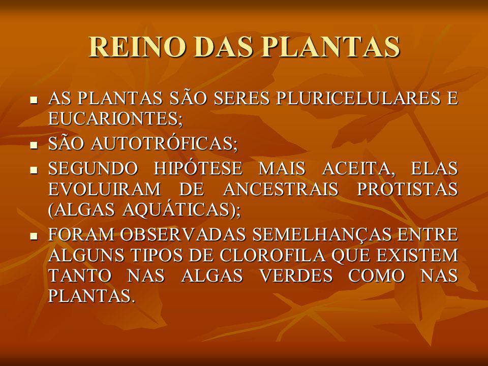 CLASSIFICAÇÃO DAS PLANTAS CRITÉRIOS PARA CLASSIFICAÇÃO DAS PLANTAS: CRITÉRIOS PARA CLASSIFICAÇÃO DAS PLANTAS: - A CARACTERÍSTICA DA PLANTA SER VASCULAR OU AVASCULAR, ISTO É, A PRESENÇA OU NÃO DE VASOS CONDUTORES DE SEIVA BRUTA (ÁGUA E SAIS MINERAIS) E ELABORADA (MATÉRIA ORGÂNICA).