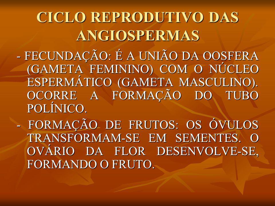 CICLO REPRODUTIVO DAS ANGIOSPERMAS - FECUNDAÇÃO: É A UNIÃO DA OOSFERA (GAMETA FEMININO) COM O NÚCLEO ESPERMÁTICO (GAMETA MASCULINO). OCORRE A FORMAÇÃO