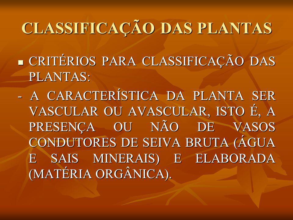 CLASSIFICAÇÃO DAS PLANTAS CRITÉRIOS PARA CLASSIFICAÇÃO DAS PLANTAS: CRITÉRIOS PARA CLASSIFICAÇÃO DAS PLANTAS: - A CARACTERÍSTICA DA PLANTA SER VASCULA