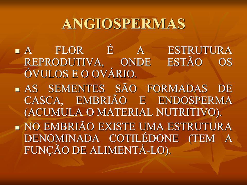 ANGIOSPERMAS A FLOR É A ESTRUTURA REPRODUTIVA, ONDE ESTÃO OS ÓVULOS E O OVÁRIO. A FLOR É A ESTRUTURA REPRODUTIVA, ONDE ESTÃO OS ÓVULOS E O OVÁRIO. AS