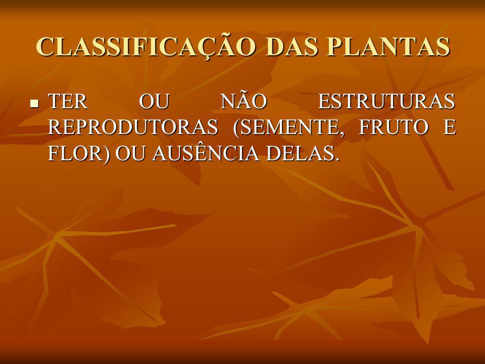 PLANTAS FANERÓGAMAS SÃO PLANTAS QUE POSSUEM SEMENTES; SÃO PLANTAS QUE POSSUEM SEMENTES; POSSUEM RAIZ, CAULE E FOLHAS; POSSUEM RAIZ, CAULE E FOLHAS; ALGUMAS POSSUEM FRUTOS; ALGUMAS POSSUEM FRUTOS; SÃO DIVIDIDAS EM DOIS GRUPOS: SÃO DIVIDIDAS EM DOIS GRUPOS: - GIMNOSPERMAS; - ANGIOSPERMAS;