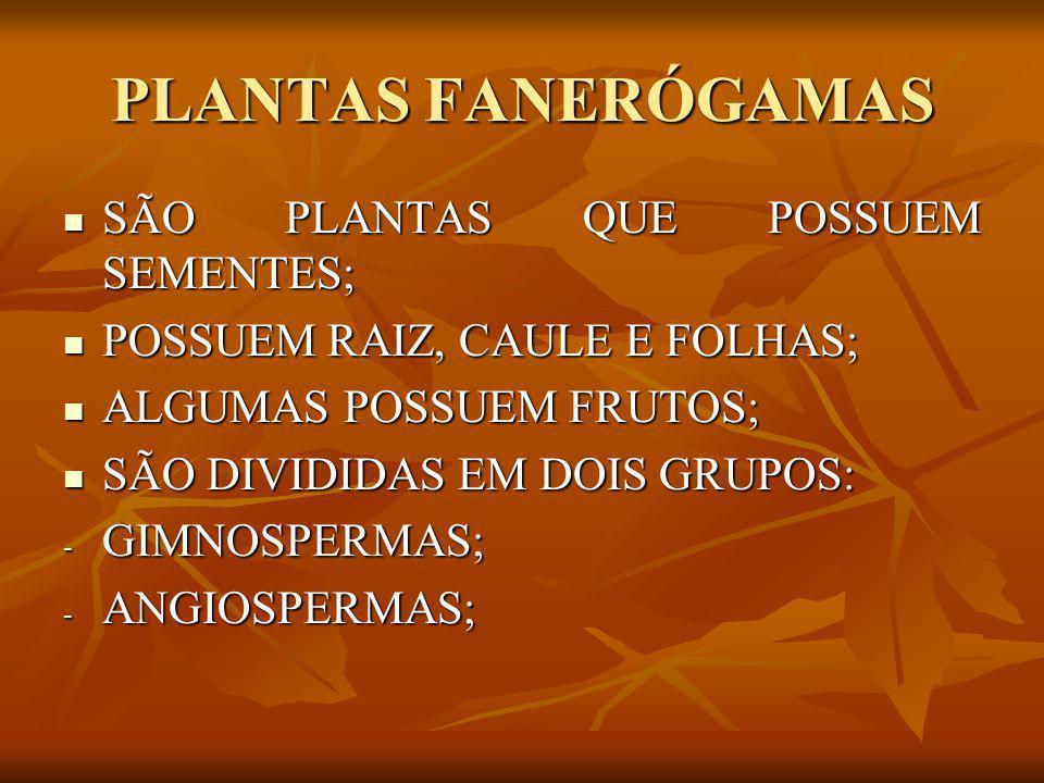 PLANTAS FANERÓGAMAS SÃO PLANTAS QUE POSSUEM SEMENTES; SÃO PLANTAS QUE POSSUEM SEMENTES; POSSUEM RAIZ, CAULE E FOLHAS; POSSUEM RAIZ, CAULE E FOLHAS; AL