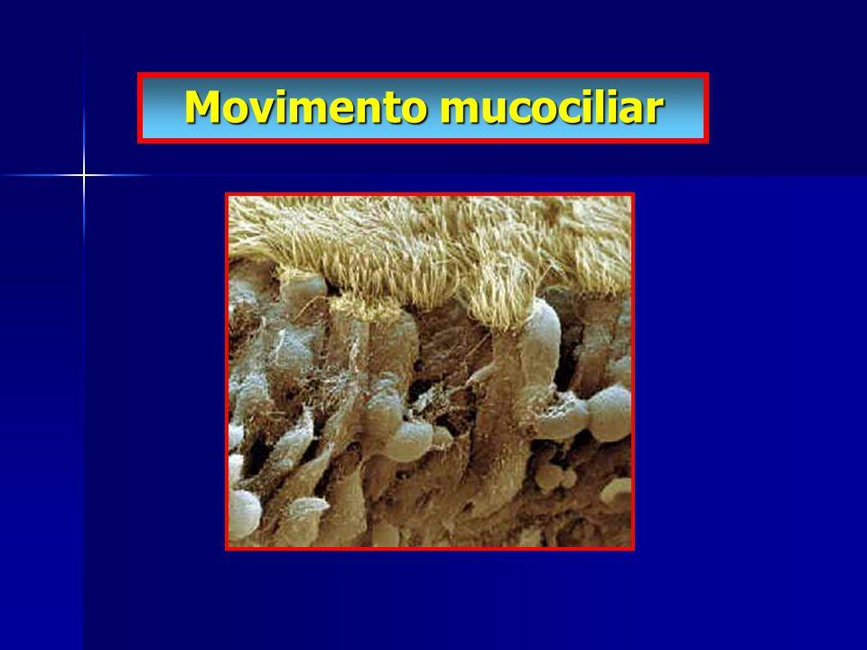 Logo abaixo dos cílios, há uns pequeninos buracos que são bocas de glândulas.