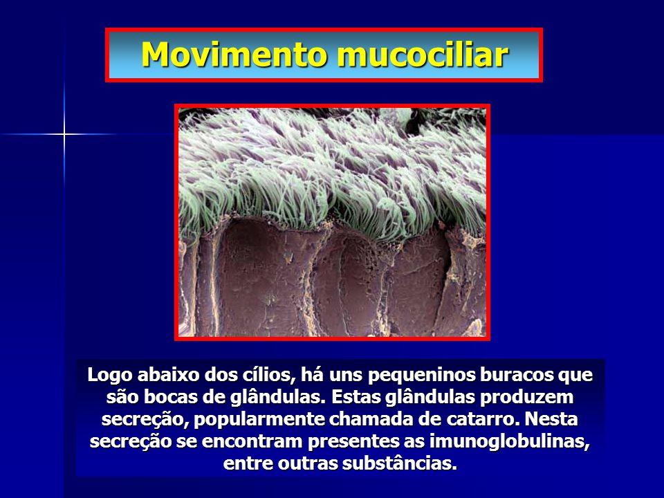 Logo abaixo dos cílios, há uns pequeninos buracos que são bocas de glândulas. Estas glândulas produzem secreção, popularmente chamada de catarro. Nest