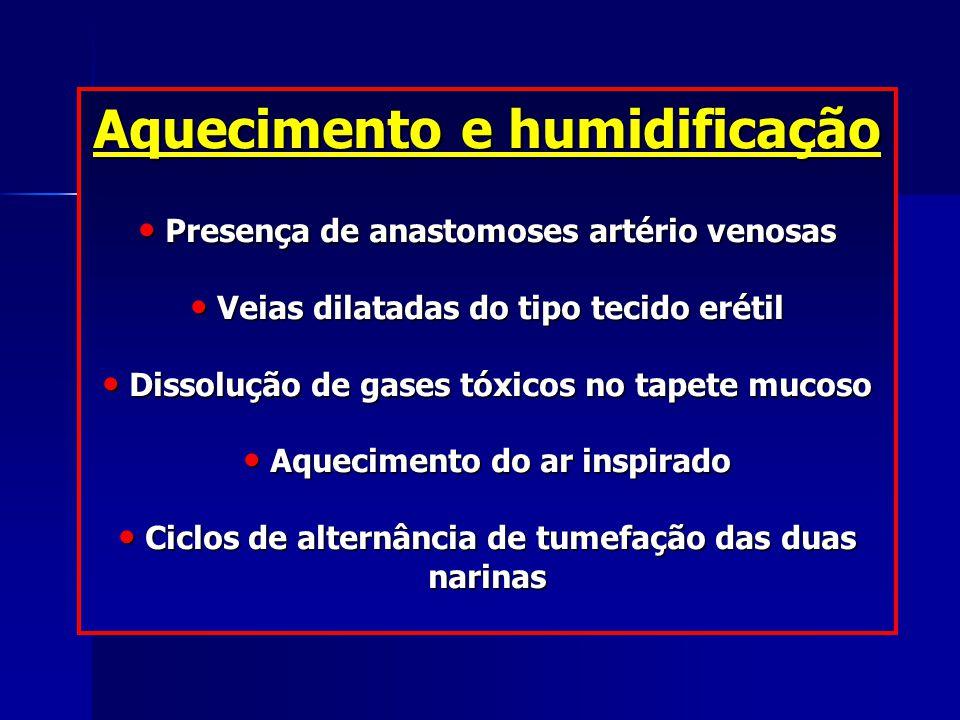 Aquecimento e humidificação Presença de anastomoses artério venosas Presença de anastomoses artério venosas Veias dilatadas do tipo tecido erétil Veia