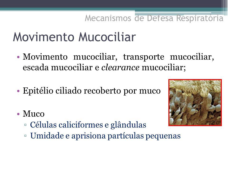 Movimento Mucociliar Movimento mucociliar, transporte mucociliar, escada mucociliar e clearance mucociliar; Epitélio ciliado recoberto por muco Muco ▫