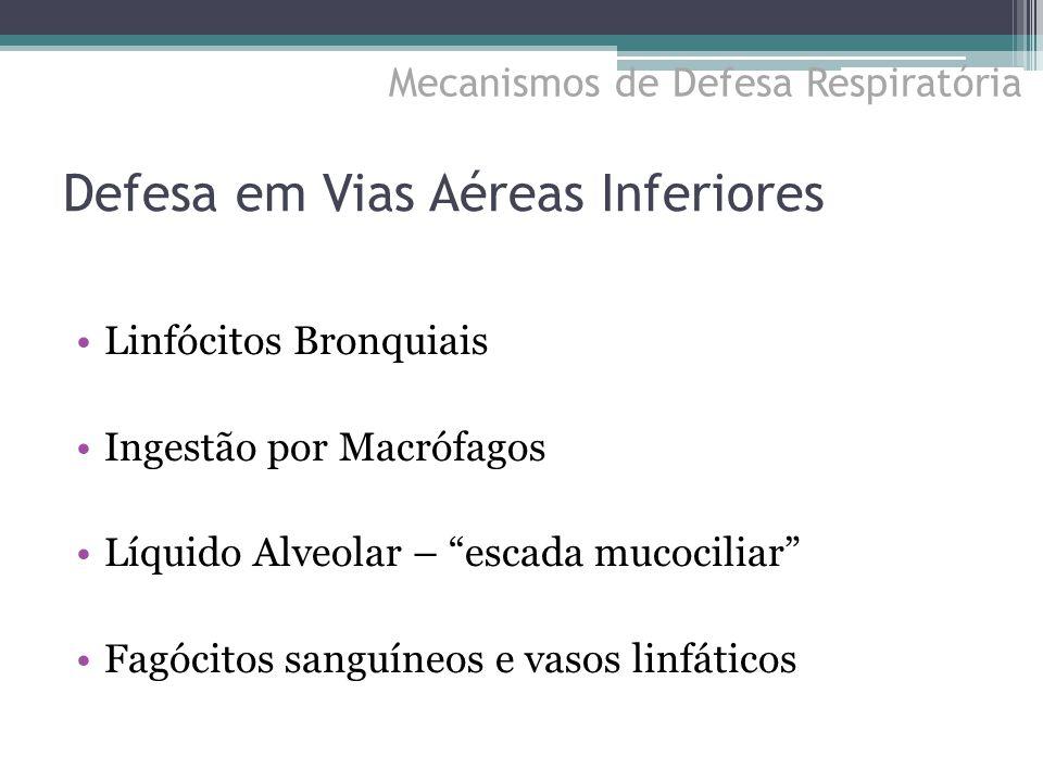 """Defesa em Vias Aéreas Inferiores Linfócitos Bronquiais Ingestão por Macrófagos Líquido Alveolar – """"escada mucociliar"""" Fagócitos sanguíneos e vasos lin"""