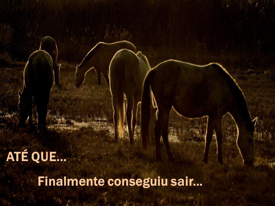 Logo os homens perceberam que o cavalo não se deixava enterrar, mas... AO CONTRÁRIO!!! Estava subindo à medida que a terra enchia o poço.