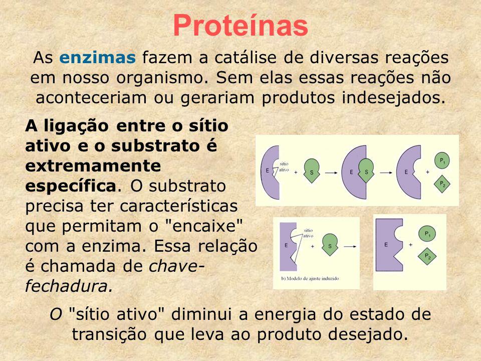 Proteínas As enzimas fazem a catálise de diversas reações em nosso organismo.