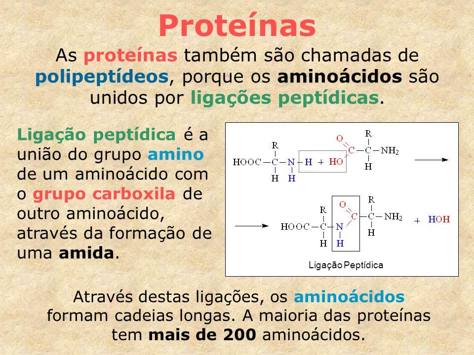 Proteínas As proteínas também são chamadas de polipeptídeos, porque os aminoácidos são unidos por ligações peptídicas.