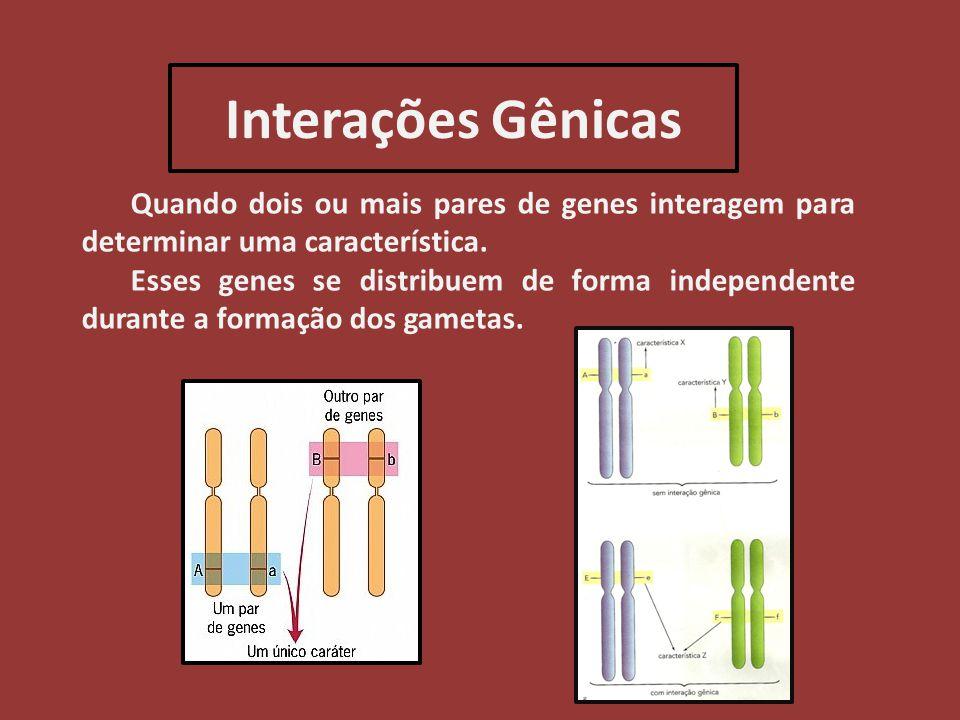 Interações Gênicas Quando dois ou mais pares de genes interagem para determinar uma característica. Esses genes se distribuem de forma independente du