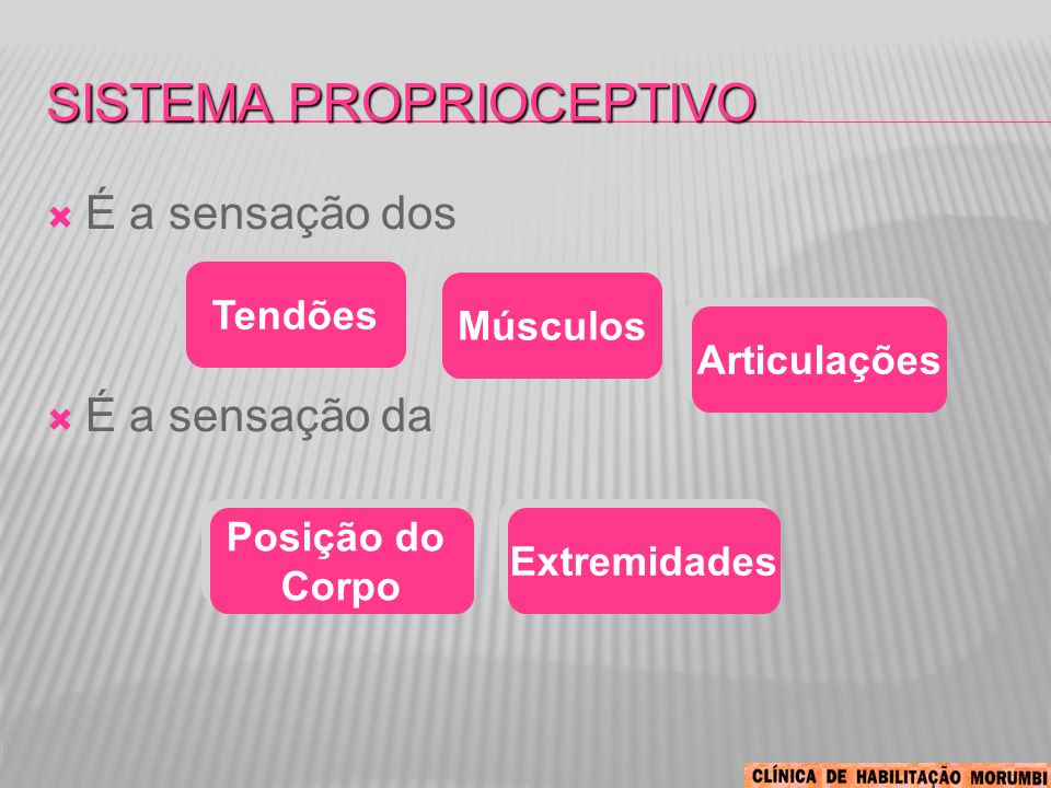 SISTEMA PROPRIOCEPTIVO  É a sensação dos  É a sensação da Tendões Músculos Articulações Posição do Corpo Posição do Corpo Extremidades