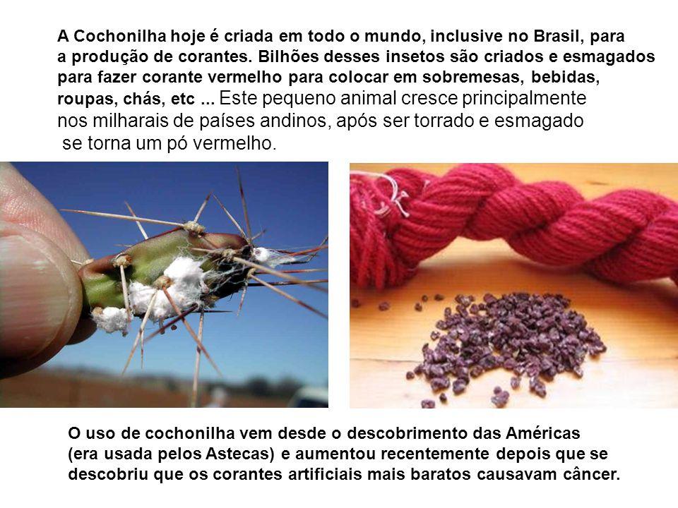 A Cochonilha hoje é criada em todo o mundo, inclusive no Brasil, para a produção de corantes. Bilhões desses insetos são criados e esmagados para faze
