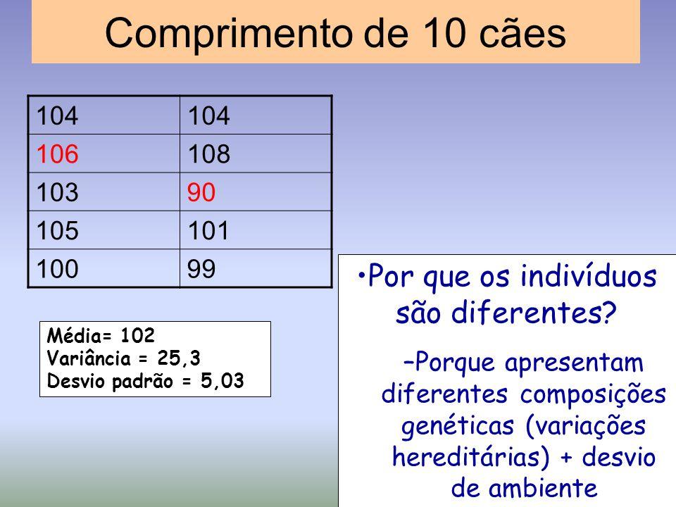 Comprimento de 10 cães 104 106108 10390 105101 10099 Média= 102 Variância = 25,3 Desvio padrão = 5,03 Por que os indivíduos são diferentes? –Porque ap