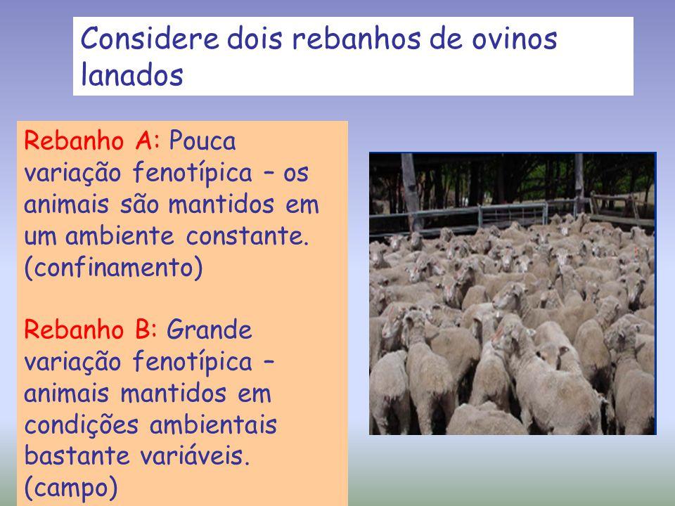 Considere dois rebanhos de ovinos lanados Rebanho A: Pouca variação fenotípica – os animais são mantidos em um ambiente constante. (confinamento) Reba