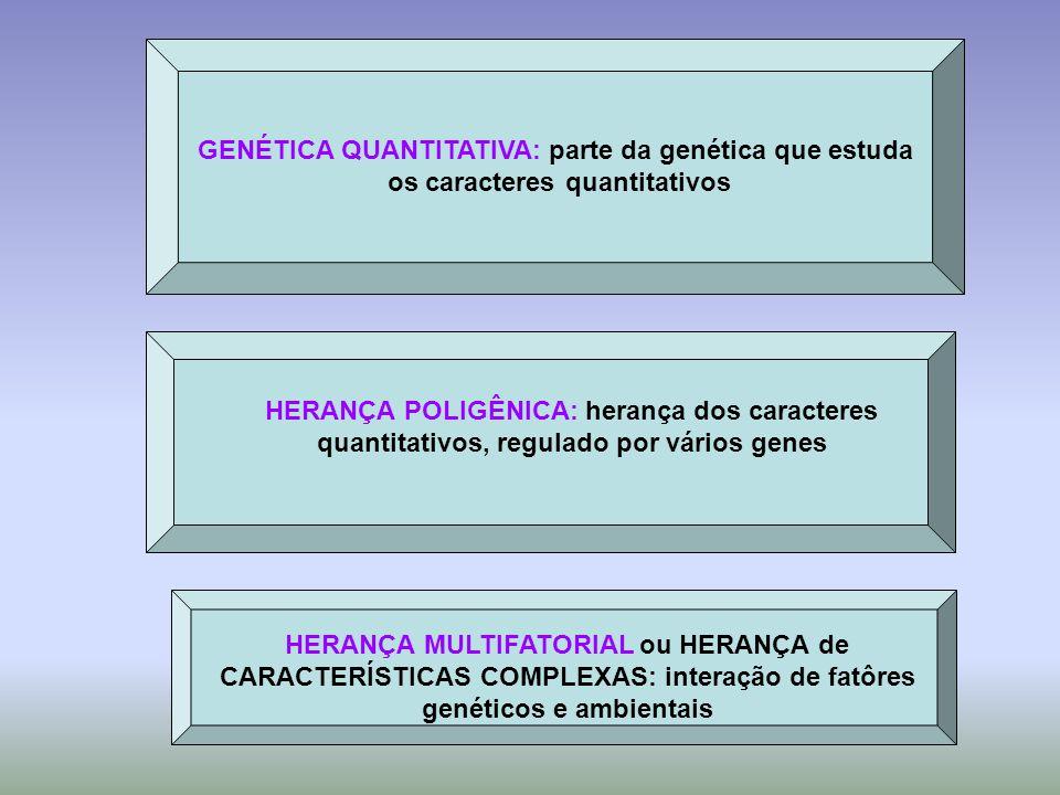 GENÉTICA QUANTITATIVA: parte da genética que estuda os caracteres quantitativos HERANÇA POLIGÊNICA: herança dos caracteres quantitativos, regulado por