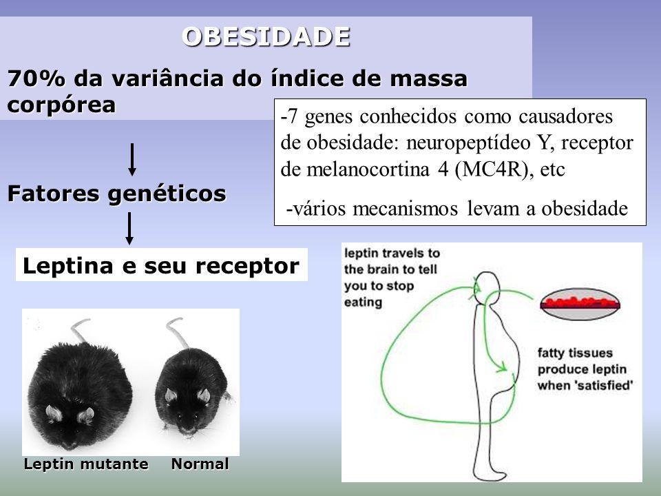 OBESIDADE OBESIDADE 70% da variância do índice de massa corpórea Fatores genéticos Leptin mutante Normal Leptina e seu receptor -7 genes conhecidos co