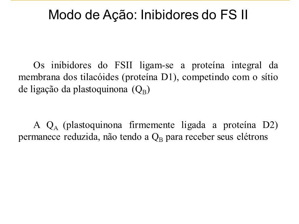 Modo de Ação: Inibidores do FS II Os inibidores do FSII ligam-se a proteína integral da membrana dos tilacóides (proteína D1), competindo com o sítio de ligação da plastoquinona (Q B ) A Q A (plastoquinona firmemente ligada a proteína D2) permanece reduzida, não tendo a Q B para receber seus elétrons
