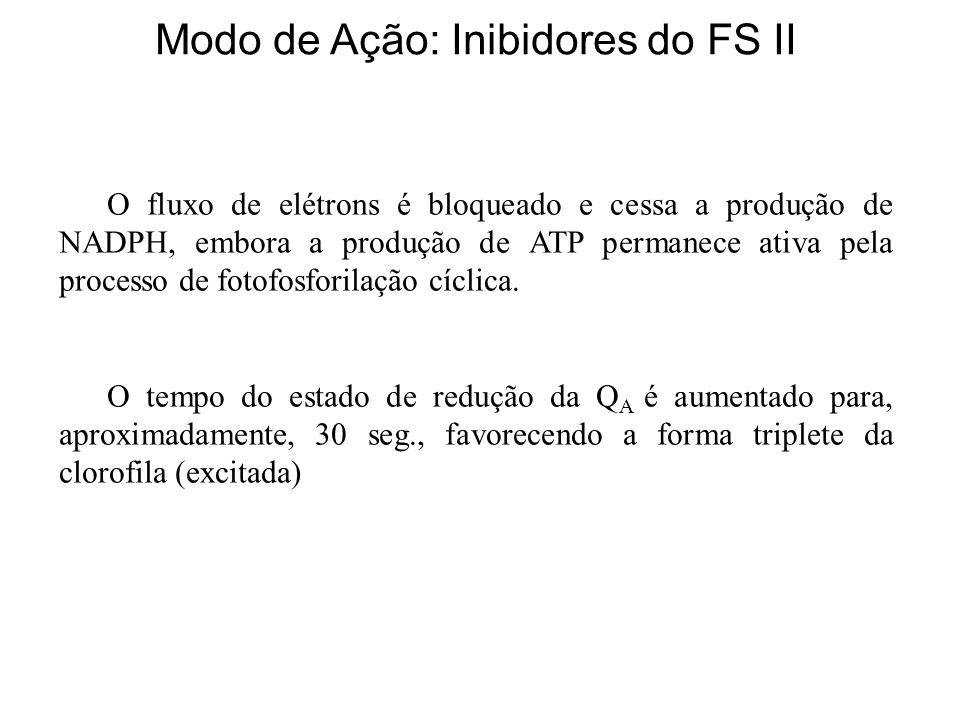 Modo de Ação: Inibidores do FS II O fluxo de elétrons é bloqueado e cessa a produção de NADPH, embora a produção de ATP permanece ativa pela processo de fotofosforilação cíclica.