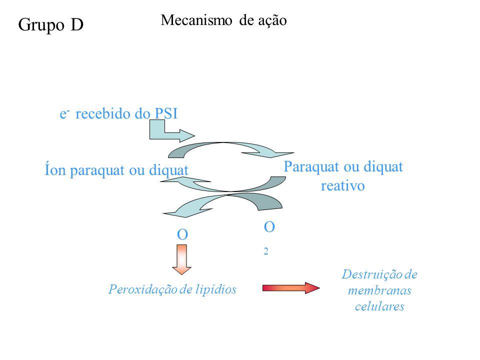 e - recebido do PSI Íon paraquat ou diquat Paraquat ou diquat reativo O2O2 O2-O2- Peroxidação de lipídios Destruição de membranas celulares Mecanismo de ação Grupo D