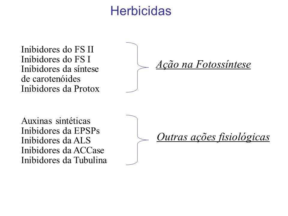 Inibidores do FS II Inibidores do FS I Inibidores da síntese de carotenóides Inibidores da Protox Herbicidas Ação na Fotossíntese Auxinas sintéticas Inibidores da EPSPs Inibidores da ALS Inibidores da ACCase Inibidores da Tubulina Outras ações fisiológicas
