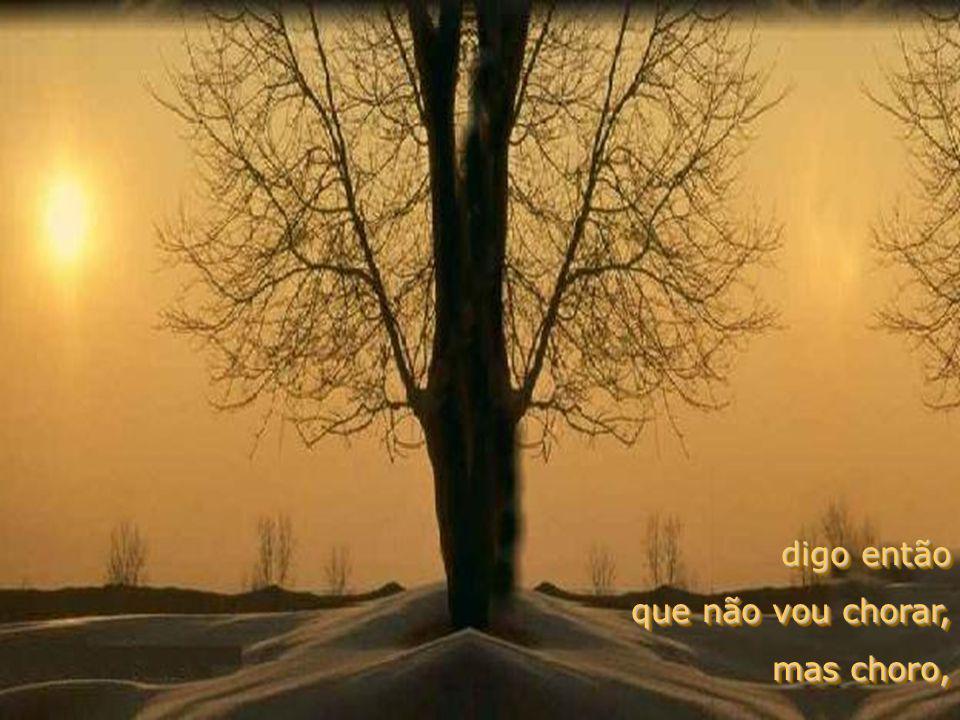 pelas injustiças que vejo pelas dores de todos os peitos, pela fome, pelas guerras, pelas doenças de nossa terra...