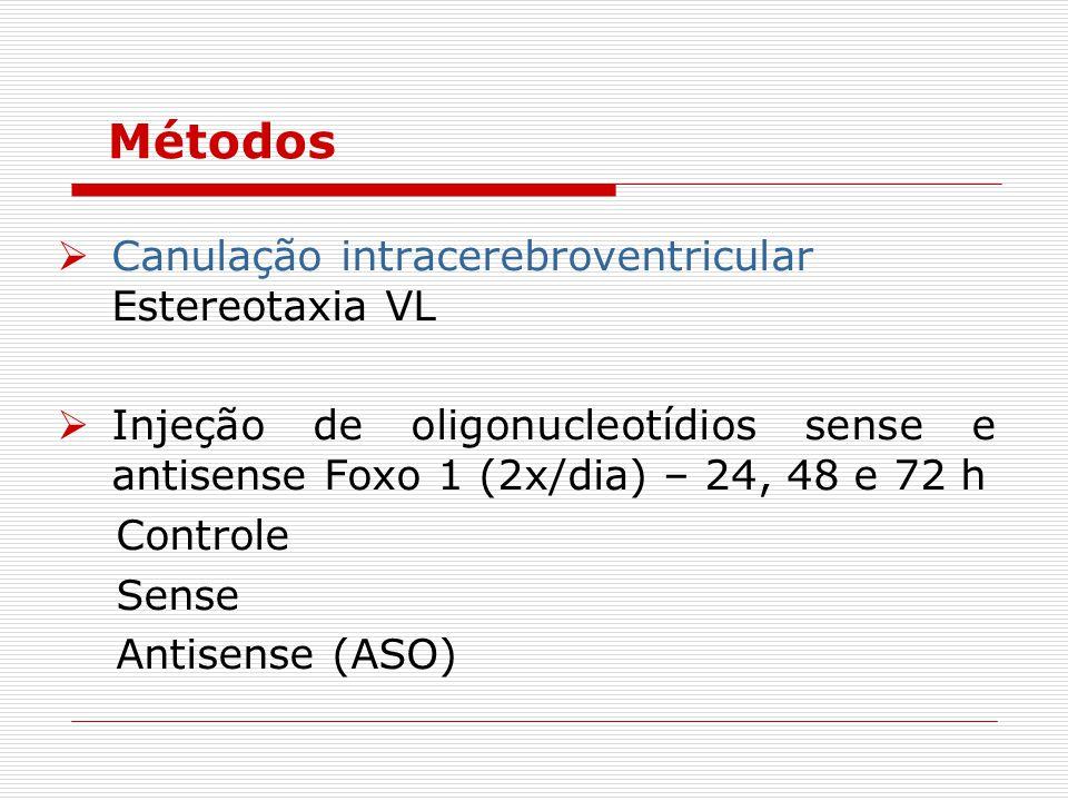  Canulação intracerebroventricular Estereotaxia VL  Injeção de oligonucleotídios sense e antisense Foxo 1 (2x/dia) – 24, 48 e 72 h Controle Sense Antisense (ASO) Métodos