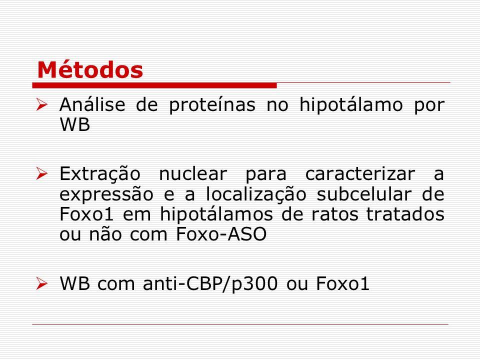  Análise de proteínas no hipotálamo por WB  Extração nuclear para caracterizar a expressão e a localização subcelular de Foxo1 em hipotálamos de ratos tratados ou não com Foxo-ASO  WB com anti-CBP/p300 ou Foxo1