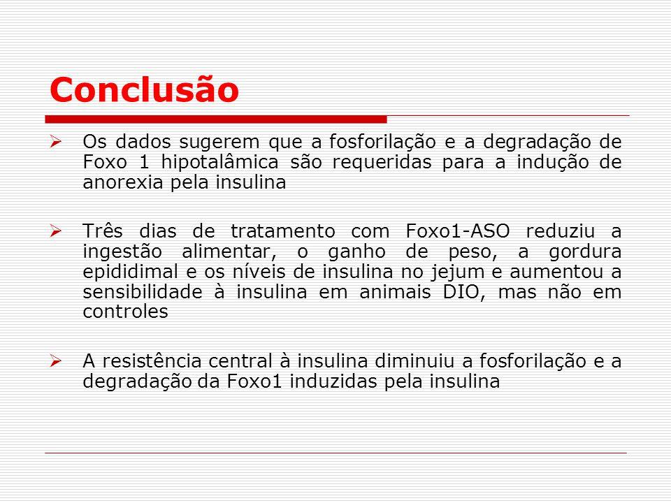 Conclusão  Os dados sugerem que a fosforilação e a degradação de Foxo 1 hipotalâmica são requeridas para a indução de anorexia pela insulina  Três dias de tratamento com Foxo1-ASO reduziu a ingestão alimentar, o ganho de peso, a gordura epididimal e os níveis de insulina no jejum e aumentou a sensibilidade à insulina em animais DIO, mas não em controles  A resistência central à insulina diminuiu a fosforilação e a degradação da Foxo1 induzidas pela insulina