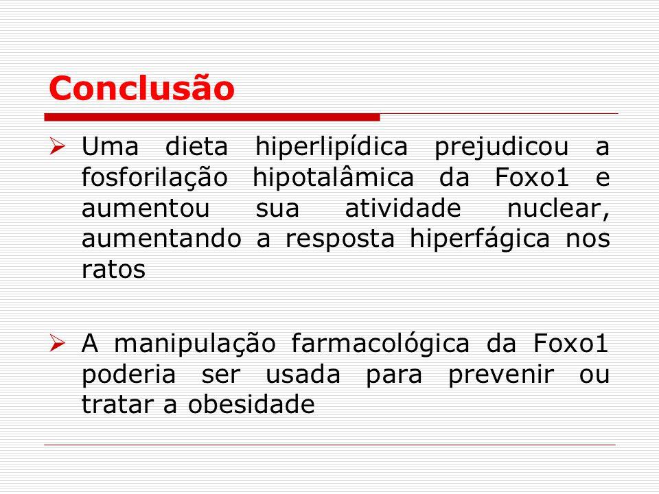 Conclusão  Uma dieta hiperlipídica prejudicou a fosforilação hipotalâmica da Foxo1 e aumentou sua atividade nuclear, aumentando a resposta hiperfágica nos ratos  A manipulação farmacológica da Foxo1 poderia ser usada para prevenir ou tratar a obesidade
