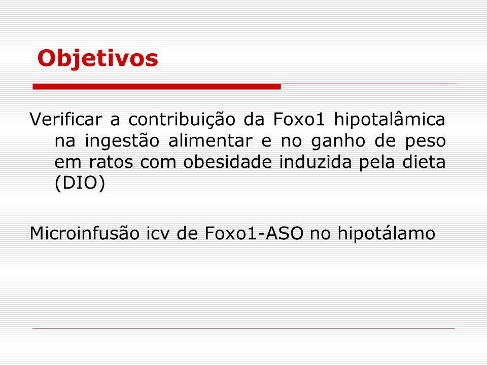 Objetivos Verificar a contribuição da Foxo1 hipotalâmica na ingestão alimentar e no ganho de peso em ratos com obesidade induzida pela dieta (DIO) Microinfusão icv de Foxo1-ASO no hipotálamo