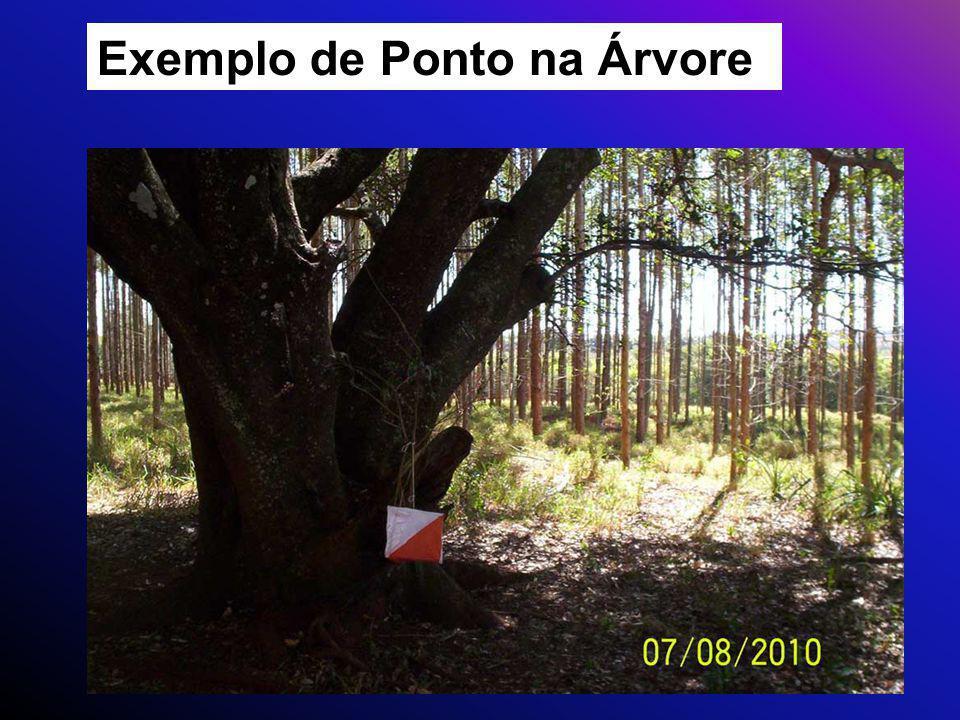 Exemplo de Ponto na Árvore