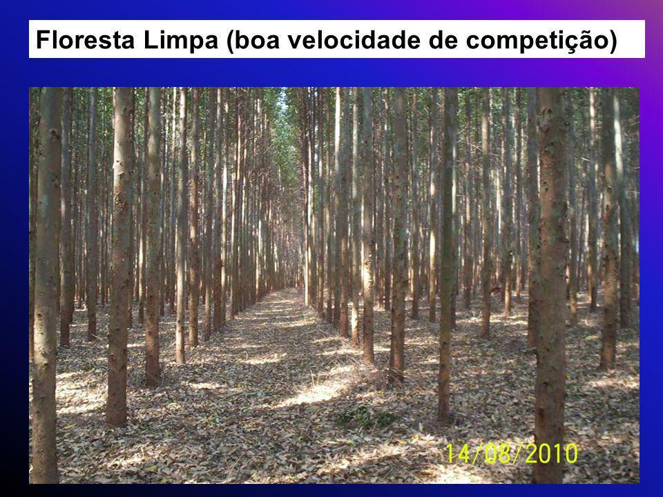 Floresta Limpa (boa velocidade de competição)