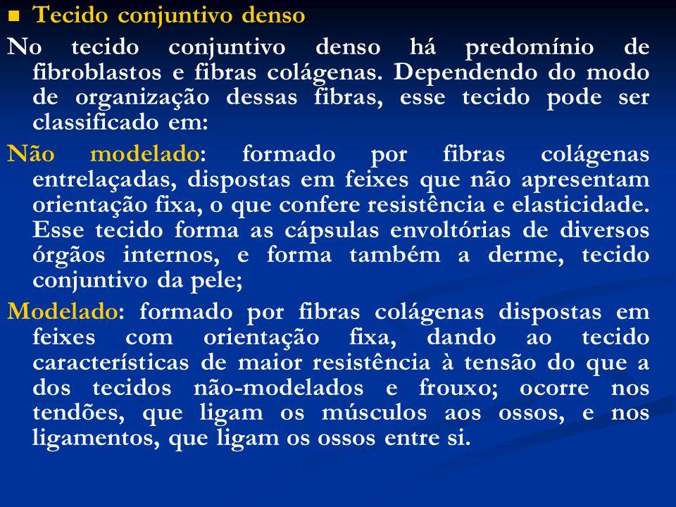 Tecido conjuntivo denso No tecido conjuntivo denso há predomínio de fibroblastos e fibras colágenas. Dependendo do modo de organização dessas fibras,