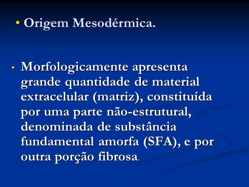 Tecido conjuntivo denso No tecido conjuntivo denso há predomínio de fibroblastos e fibras colágenas.