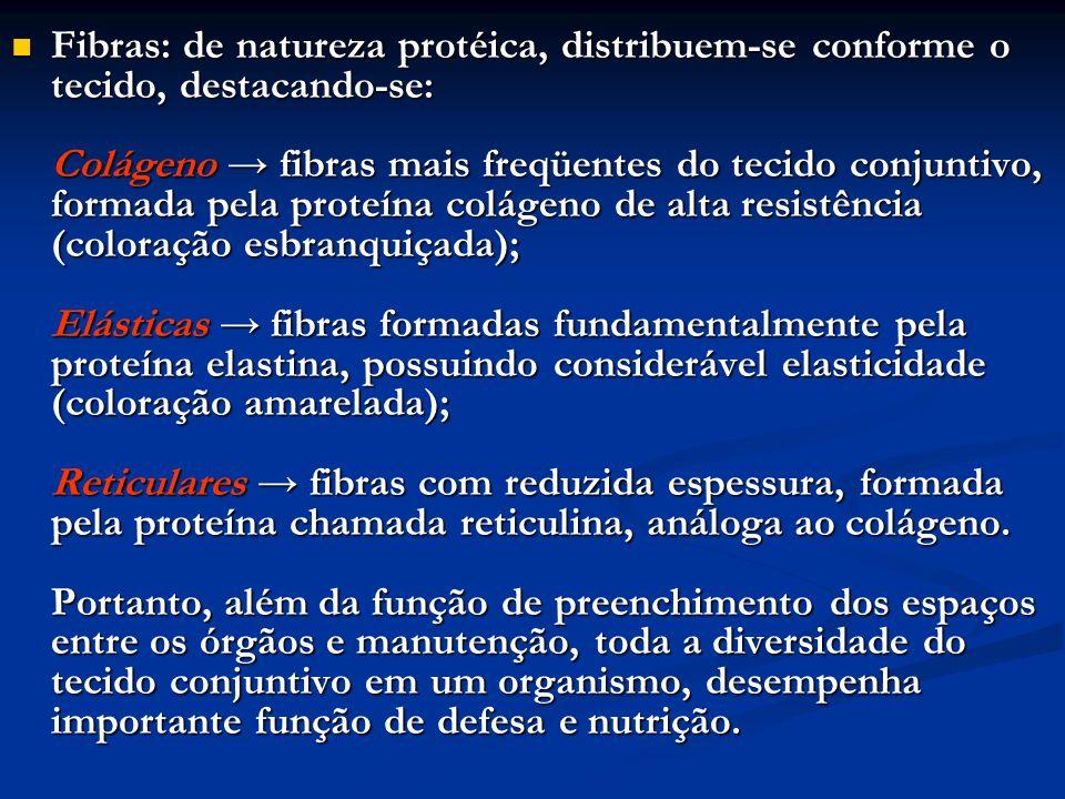 Fibras: de natureza protéica, distribuem-se conforme o tecido, destacando-se: Colágeno → fibras mais freqüentes do tecido conjuntivo, formada pela pro