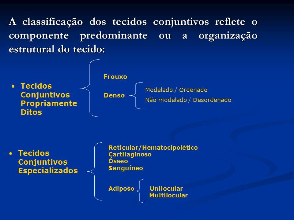 A classificação dos tecidos conjuntivos reflete o componente predominante ou a organização estrutural do tecido: Tecidos Conjuntivos Propriamente Dito