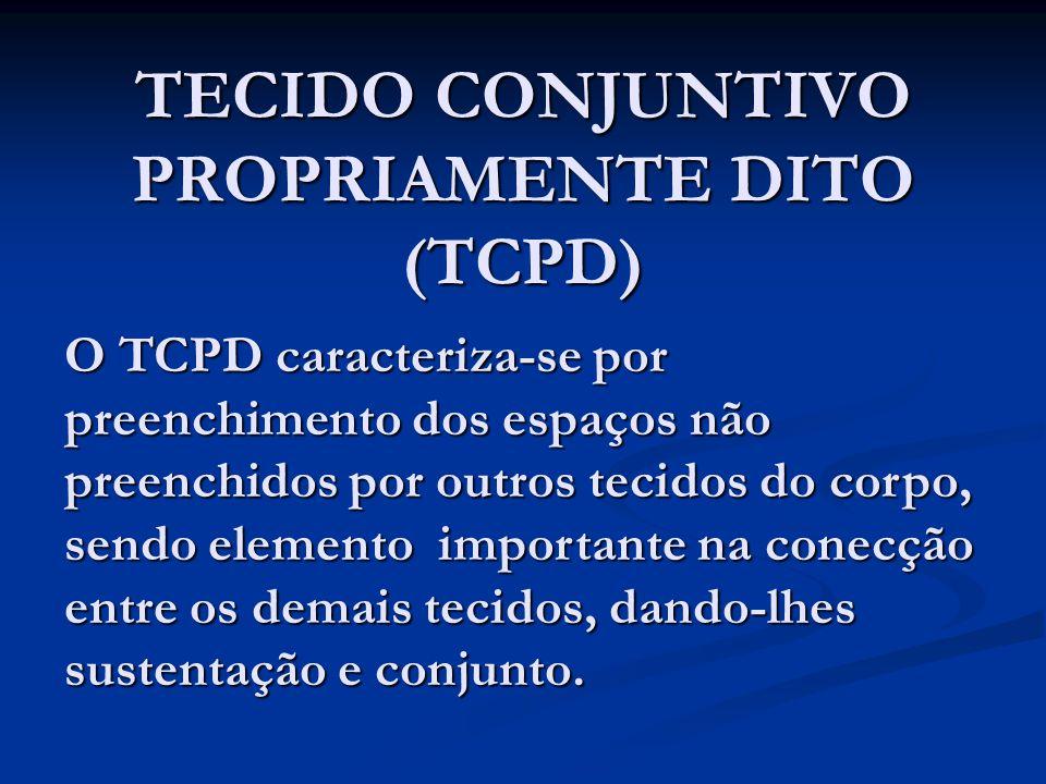 TECIDO CONJUNTIVO PROPRIAMENTE DITO (TCPD) O TCPD caracteriza-se por preenchimento dos espaços não preenchidos por outros tecidos do corpo, sendo elem