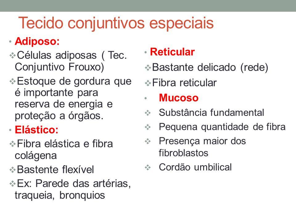 Tecido conjuntivos especiais Adiposo:  Células adiposas ( Tec. Conjuntivo Frouxo)  Estoque de gordura que é importante para reserva de energia e pro