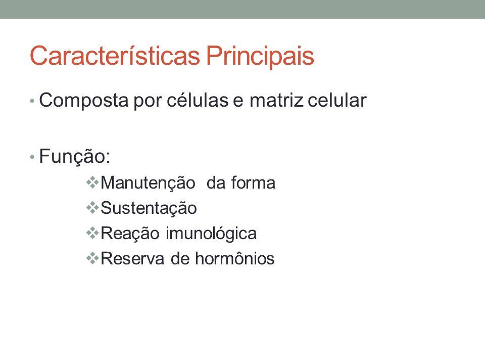 Características Principais Composta por células e matriz celular Função:  Manutenção da forma  Sustentação  Reação imunológica  Reserva de hormôni