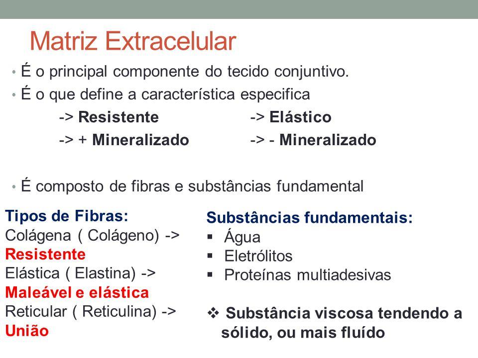 Matriz Extracelular É o principal componente do tecido conjuntivo. É o que define a característica especifica -> Resistente-> Elástico -> + Mineraliza