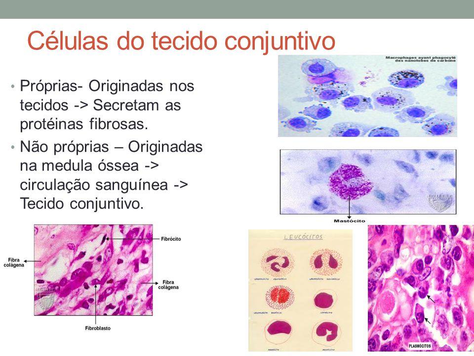 Células do tecido conjuntivo Próprias- Originadas nos tecidos -> Secretam as protéinas fibrosas. Não próprias – Originadas na medula óssea -> circulaç