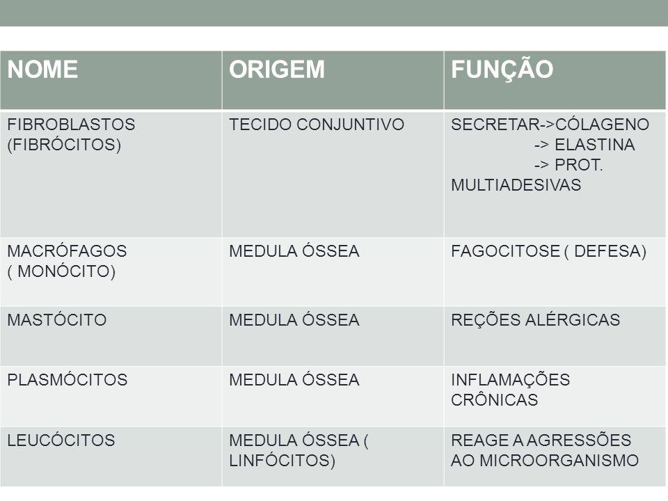 NOMEORIGEMFUNÇÃO FIBROBLASTOS (FIBRÓCITOS) TECIDO CONJUNTIVOSECRETAR->CÓLAGENO -> ELASTINA -> PROT. MULTIADESIVAS MACRÓFAGOS ( MONÓCITO) MEDULA ÓSSEAF