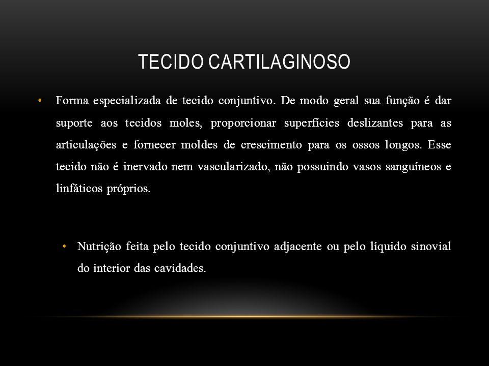 TECIDO CARTILAGINOSO Forma especializada de tecido conjuntivo. De modo geral sua função é dar suporte aos tecidos moles, proporcionar superfícies desl