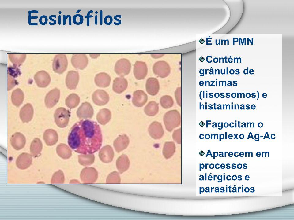 Eosin ó filos É um PMN Contém grânulos de enzimas (lisossomos) e histaminase Fagocitam o complexo Ag-Ac Aparecem em processos alérgicos e parasitários