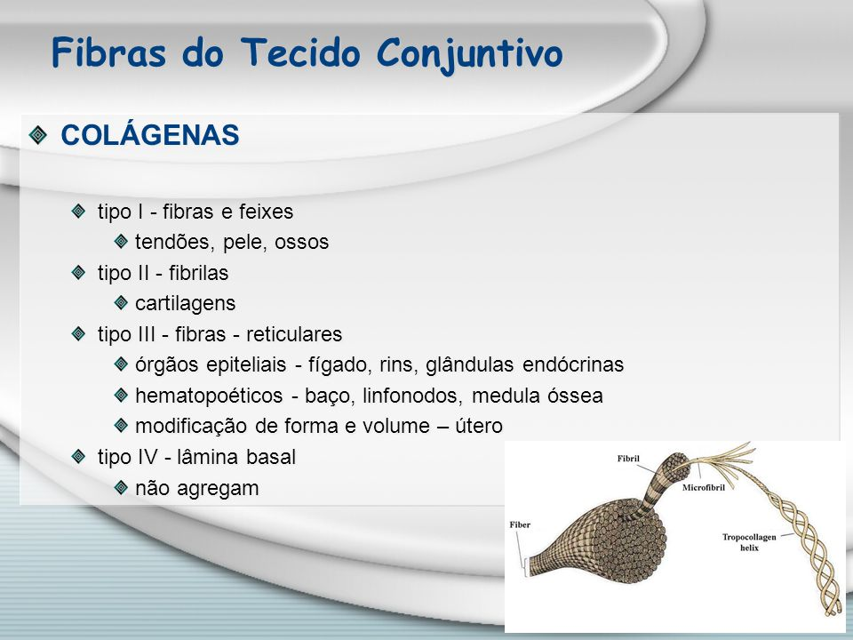 Fibras do Tecido Conjuntivo COLÁGENAS tipo I - fibras e feixes tendões, pele, ossos tipo II - fibrilas cartilagens tipo III - fibras - reticulares órg